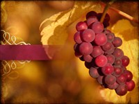 Thanksgiving grapes